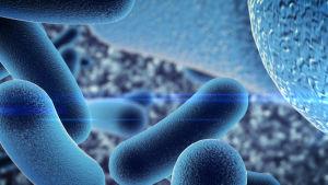 En 3D-bild på bakterier.