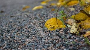 En bild på grus och ett gult löv.