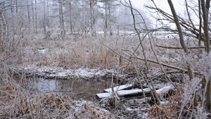 Snötäckta plankor i ett dike fyllt med vatten.