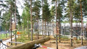 Klätterställningar i en skog.