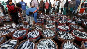 La Niña fenomenet hade positiva effekter bland annat i Indonesien där fiskefångsterna ökade till följd av La Niña