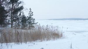 En snöig och isig vinter i skärgården.