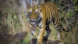 Kolmiosaisessa luontodokumenttisarjassa tutustutaan Intian luonnon monimuotoisuuteen.