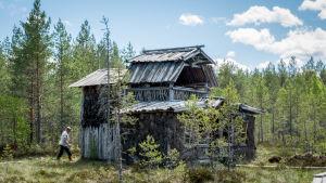 Mies kävelee kohti omatekoista kaksikerroksista saunarakennusta suolla, Erkki Kivimäki Kammi-kylässä Nummijiärvellä.