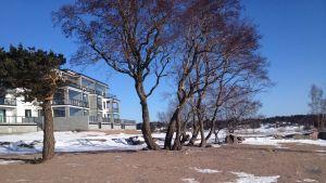 Fabriksudden i Hangö med de nybyggda svartvita husen.