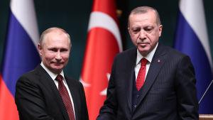Rysslands president Vladimir Putin och hans turkiska kollega Recep Tayyip Erdogan skakar hand.