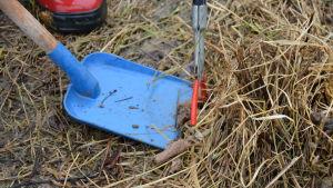 Hundbajs skyfflas på en blå spade under städtalko.