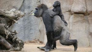Dokumenttisarjassa tutustutaan emon ja poikasen suhteeseen.