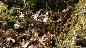 Kasveja keväisessä metsässä.