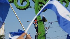 Ungdomar i Nicaragua klättrar upp i gröna metallträd