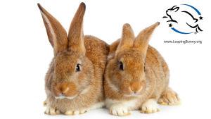 """Två bruna kaniner som sitter tätt intill varandra. Uppe i hörnet syns märket för """"Leaping bunny"""". En tecknad kanin som tar ett stort skutt."""