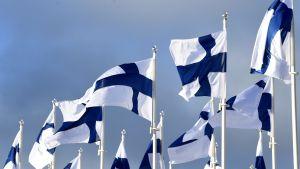 Finlands flagga i flera exemplar i Helsingfors på Finlands självständighets 100-årsdag.