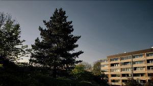 Park, höghus och träd