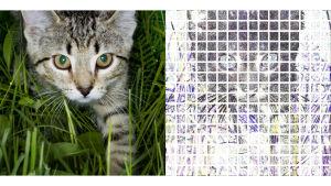 vasemmalla kuva kissasta, oikealla oppivan algoritmin matalamman tason käsitys kuvan sisällöstä. missä lähinnä tietoa kuvassa esiintyvistä ääriviivoista.