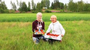 Två kvinnor som sitter på knä i långt gräs med var sin låda i knäet med jordgubbar i.