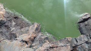 blågröna alger, grönt vatten och lite strandstenar och -klippa