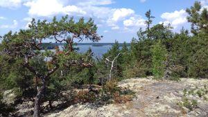 Utsikt från ett berg över skog och vatten. Berget heter Vaktkojsberget.