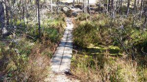 En spång över ett vått kärr i Kurjenrahka nationalpark.