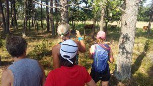 """Fyra personer i löpkläder har stannat för att fotografera kor på stiplöpningsevenemanget """"Vi drar till skogs"""" på Örö."""