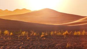 Sanddyner i öken (ospecificerad).