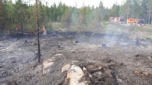 släckt skogsbrand med brandbilar och brandmän i bakgrunden