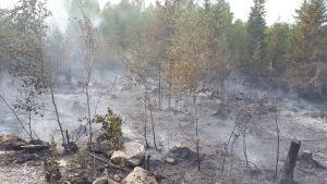 släckt skogsbrand där marken är helt grå av aska