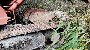 Närbild av grävmaskin i vass