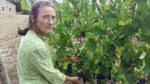 Vinproducenten Claire Naudin är orolig för de stekheta somrarna. Bland annat är vindruvorna mindre än vanligt.