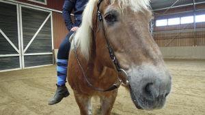 En häst med en ryttare.