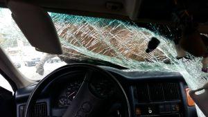 Bild inifrån en bil som kört på en älg. Älgen ligger ännu på motorhuven, medan hela högra sidan av vindrutan har tryckts in och krossats.