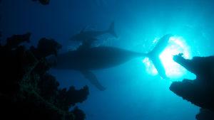 Kolmiosainen luontodokumenttisarja kertoo planeettamme rajuimpana pauhaavasta valtamerestä Atlantista.