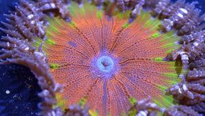 Kolmiosainen luontodokumenttisarja kertoo planeettamme ainutlaatuisesta valtamerestä Atlantista.