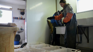 Marie kastar en sutare i vita plastlådor som står på golvet.