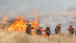 Brandmän vid stora lågor som slår upp på en slätt med högt torrt gräs.