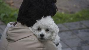 Person med liten vit hund i famnen.