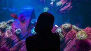 Nainen katsoo akvaariokaloja.
