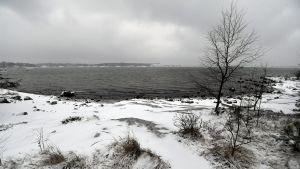 Isiga havet på blåbärslandet.