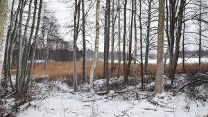 En vintrig bild över en planerad friluftsled i Ekenäs. Nu finns där enbart vass och träd.