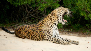 Avaran luonnon dokumenttisarja kertoo Sri Lankan ainutlaatuisesta luonnosta.