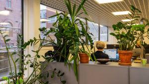 Kvinna jobbar i kontorslandskap