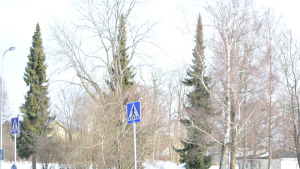 Träd på ett snöigt område i en stad.