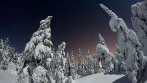 Lumisia puita talvimaisemassa yöllä.
