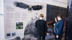 Tre personer tittar på en utställning om Kvarkens världsarv