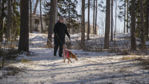 Hunden Lucky går i koppel tillsammans med Stefanie Lindroos längs med en snöig skogsstig.