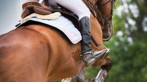 Ryttare rider en häst.