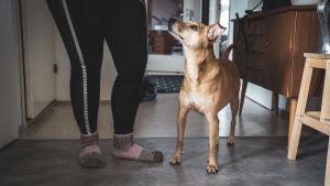 Hunden Lucky står inomhus bredvid Stefanie och tittar upp.