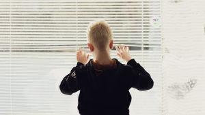 Rafael raottaa sälekaihtimia ikkunan luona.