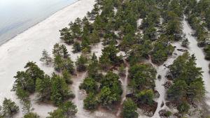 Flygbild över ett område med en strand, sand och tallar.