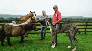 Hevonen, kaksi ponia ja niiden kokoinen koira.