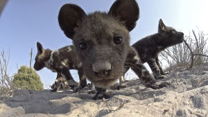 Eläimiksi naamioidut piilokamerat paljastavat hämmästyttäviä asioita.